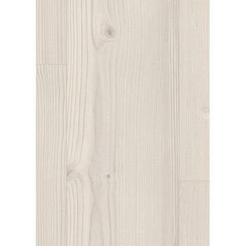 Borovica Inverey biela